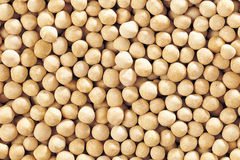 Crunchy chickpeas Royalty Free Stock Images
