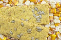 Crunchy oat thins with sunflower surrounded by dried corn grains Royalty Free Stock Image