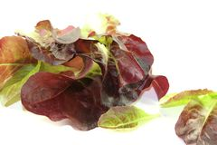 Crunchy red lettuce Stock Photo