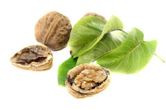 Crunchy walnuts with walnut leaves Stock Photos
