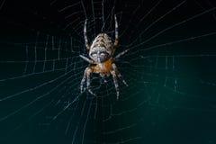 Crusader spider Stock Photo