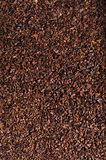 Crushed cocoa beans as a background stock photo