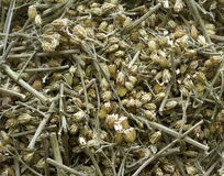 The crushed dried up curative grass. Stock Photo