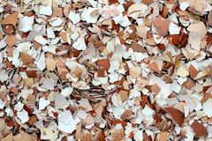 Crushed egg shells as background Royalty Free Stock Photography