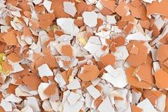 Crushed egg shells Stock Photos