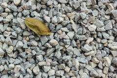 Crushed gravel texture. A leaves on crushed gravel texture Stock Images