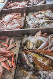 Crushed ice and fish on Greek island Kalymnos Royalty Free Stock Photography
