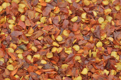 Crushed red  pepper Royalty Free Stock Photos