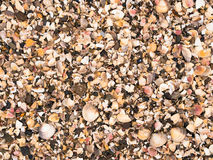 Crushed Sea Shell Background Stock Photo