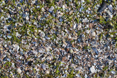 Crushed sea shells background Royalty Free Stock Photos