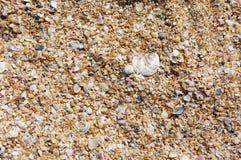 Crushed seashells background Stock Photography
