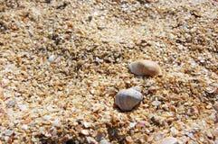 Crushed seashells background Royalty Free Stock Image