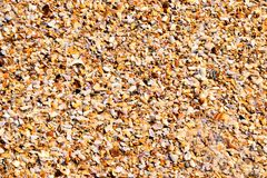 Crushed Seashells Stock Photos