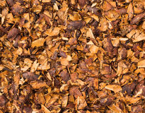 Crushed Seed Nuts Stock Photo