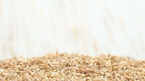 Crushed spelt on white background falling from top and filling up frame stock footage