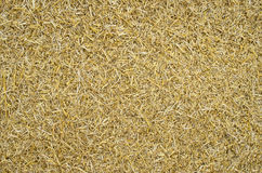 Crushed Wheat Straw Royalty Free Stock Images