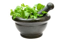 Crushing Fresh Herbs Royalty Free Stock Photography