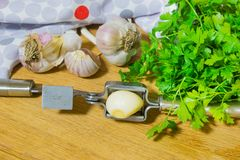 Crushing garlic to add to the dish. Whole and chopped garlic on a cutting Board made from natural oak. Fresh parsley. Stock Photo