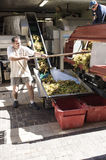 Crushing the Grapes Collioure. The coop wine production in the small town of Collioure France, off loading the grapes for their first crushing stock photography