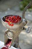 Crushing red currants. A grinder being used to crush red currants or grapes Stock Images