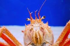 Crustáceo imagen de archivo libre de regalías