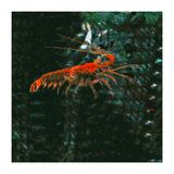 Crustáceo implacable ilustración del vector