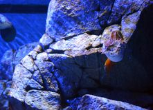 Crustáceos Imágenes de archivo libres de regalías