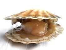 Crustáceos Fotos de archivo