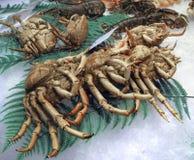 Crustáceos Imagem de Stock