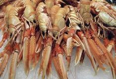 Crustáceos Fotografia de Stock Royalty Free