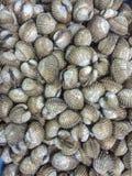 Crustáceos Foto de archivo libre de regalías