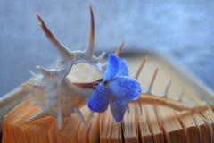 Crustáceos de la cáscara del mar del océano Fotos de archivo libres de regalías