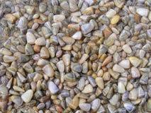 Crustáceos en la playa fotos de archivo