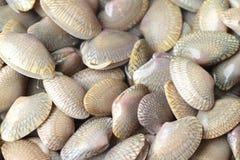 Crustáceos frescos en el mercado Fotos de archivo