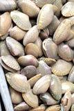 Crustáceos frescos en el mercado Imagen de archivo
