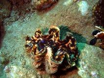 Crustáceos plegables Fotografía de archivo libre de regalías