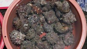 Crustáceos vivos frescos en el cuenco cubierto con agua en el mercado para la venta metrajes