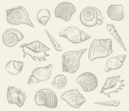 Crustáceos y conchas marinas del mar Ilustración del vector Imágenes de archivo libres de regalías