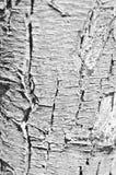 Crust cracked Stock Photography