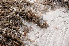 Crust of ice. Stock Photo
