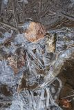 Crust of ice on a puddle of leaves Royalty Free Stock Photo