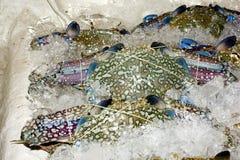 Crustac?s sur la glace Photos stock