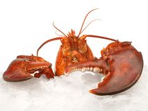 Crustac?en - homard sur la glace image stock