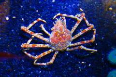 crustacean imagem de stock