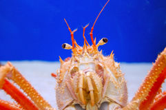 Crustacean Royalty Free Stock Image