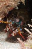 Crustacean fotografia royalty free
