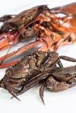 crustacean imagens de stock