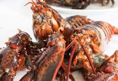 crustacean imagem de stock royalty free