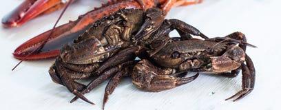 crustacean imagens de stock royalty free