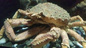 crustacean foto de stock